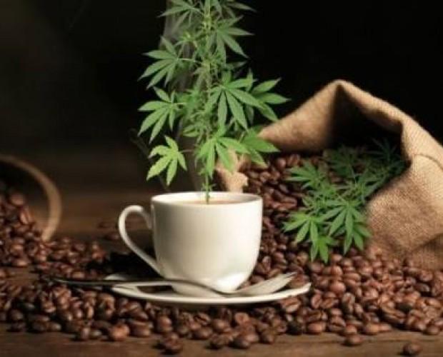 coffe cannabis